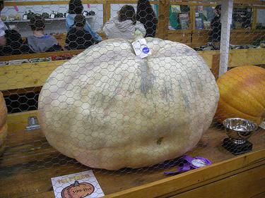 Bigger pumpkin