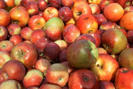Applesrule