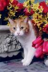Unhappy_kitty_1