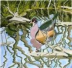 Welliver duck